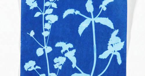 Florales Muster - Naturkunst im Schloss Moyland