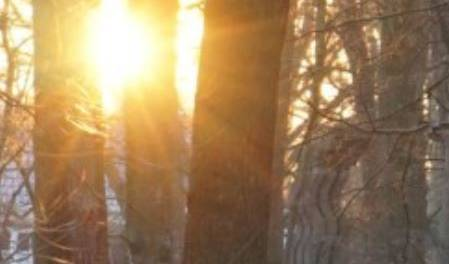 Odapark Bäume und Sonne