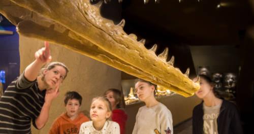'Wat eten dieren' in het Natuurhistorisch Museum Maastricht