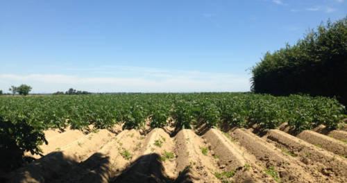 Ackerlandschaft